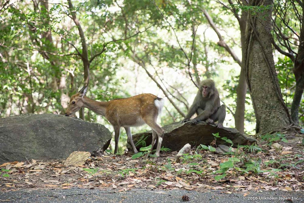 Monkey and deer