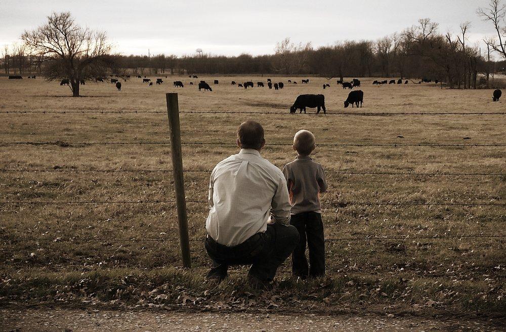 Checking Cows.jpg