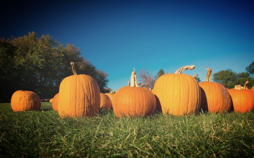 pumpkin-patch-1497978814wDr.jpg