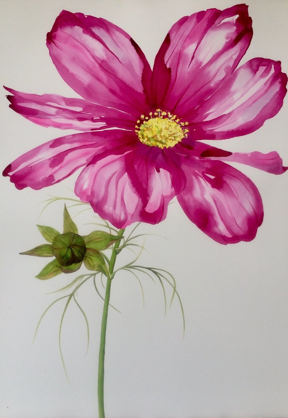 Idoline Duke  Summer Cosmos  watercolor on paper 41 x 30 in.