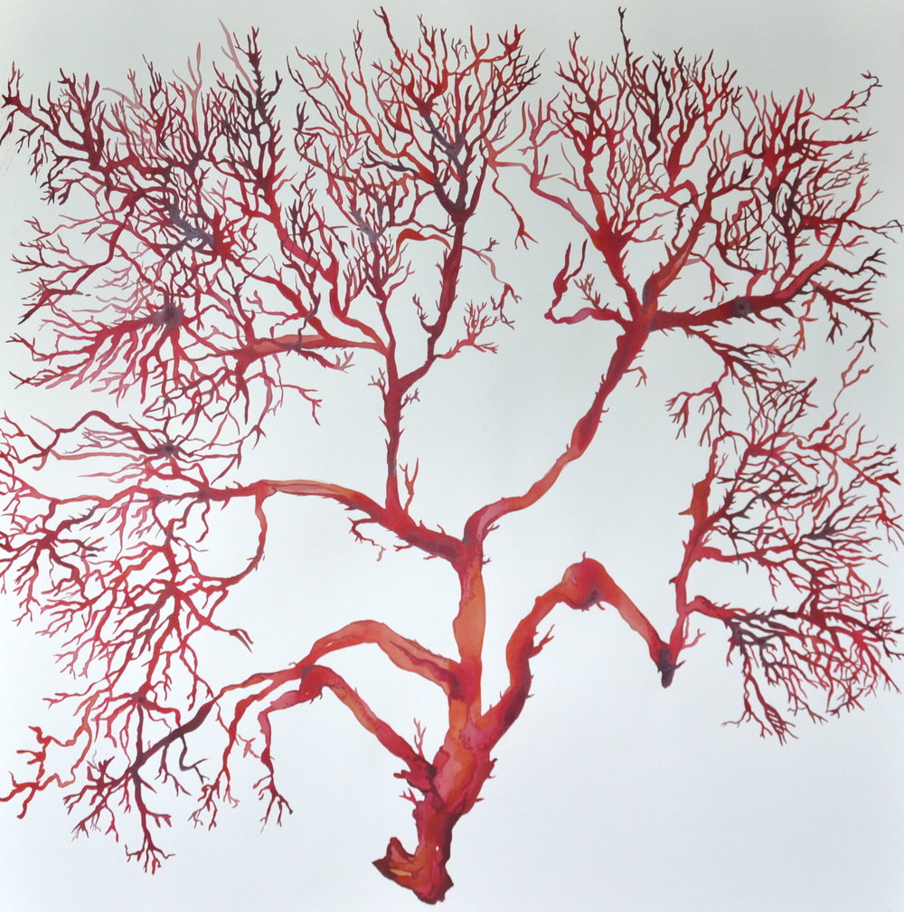 Idoline Duke  Big Red Coral  watercolor on paper 32 x 32 in.