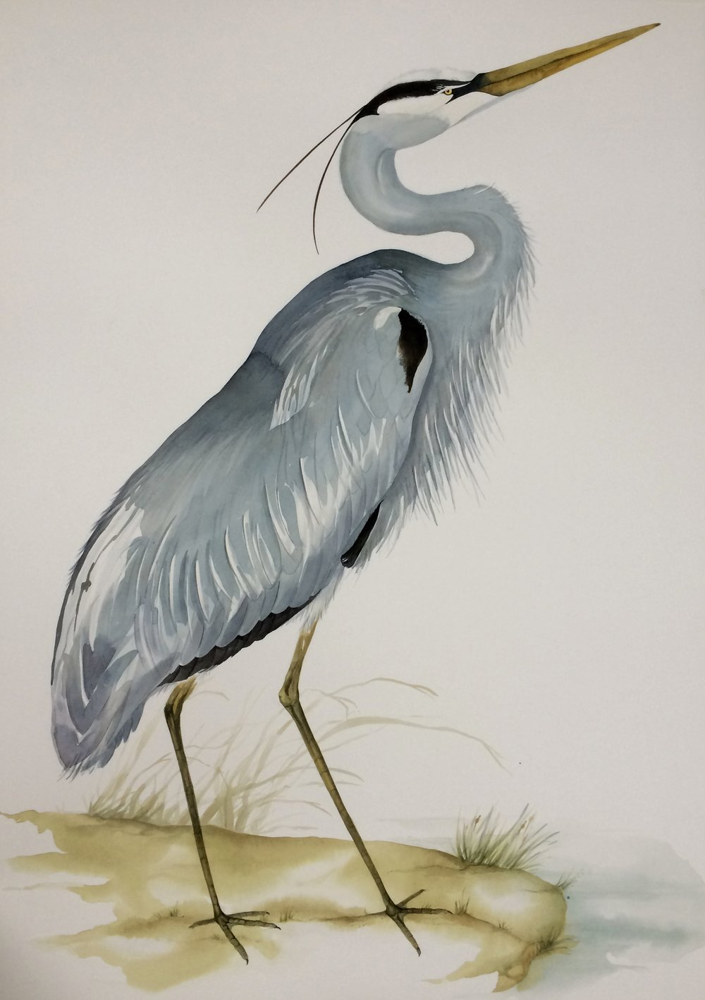 Idoline Duke  Blue Heron II  watercolor on paper 41 x 30 in.