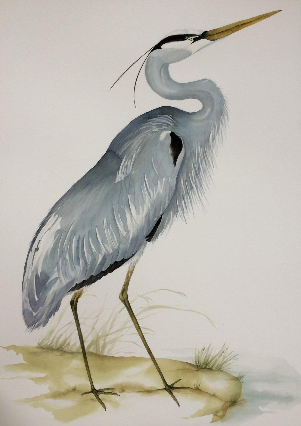 Idoline Duke  Blue Heron II  watercolor on paper 41 x 30 in.