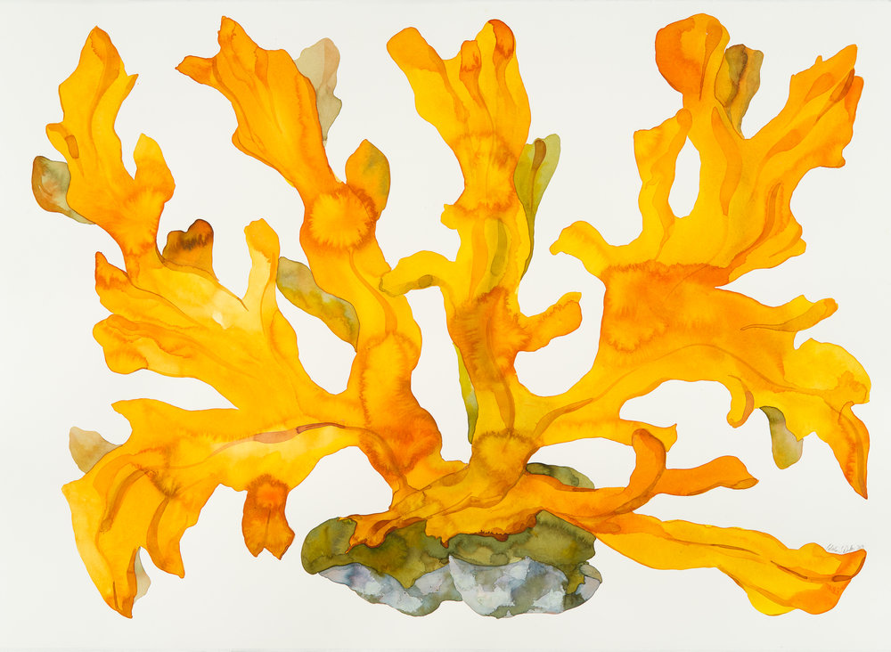Idoline Duke  Big Orange Coral II  watercolor on paper 36 x 47 in.