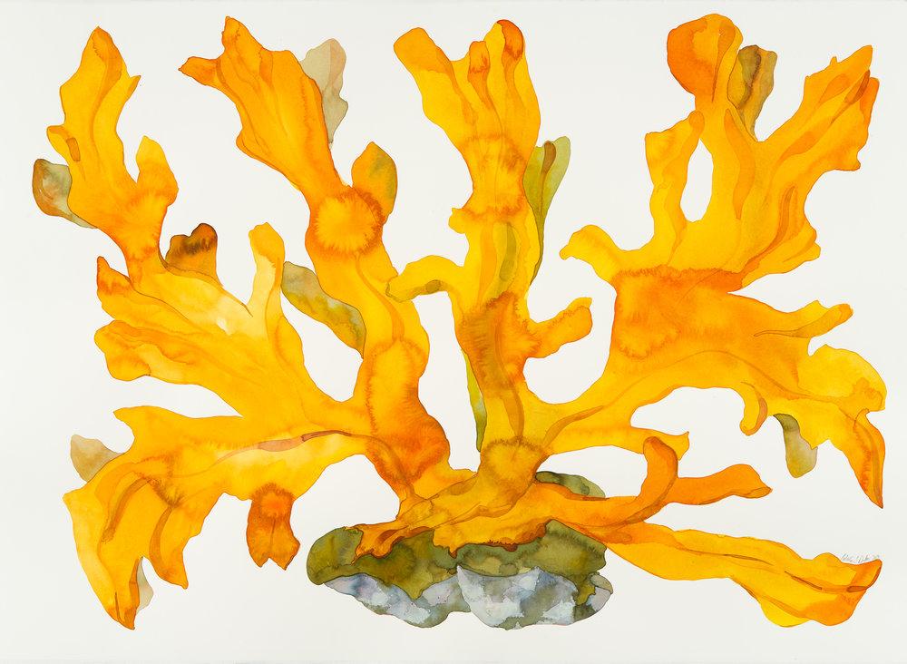 Idoline Duke  Big Orange Coral II  watercolor on paper 36 x 47 in.