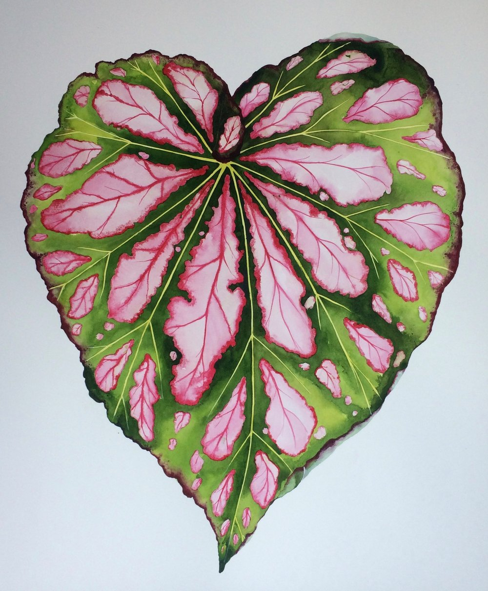 Idoline Duke  Big Begonia Leaf  watercolor on paper 35 x 30 in.