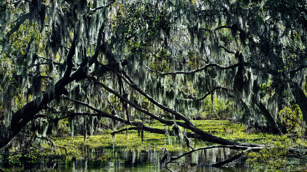 Gustavo Ten Hoever  Bayou , 2012 c-print 25 5/8 x 44 in. edition 2 of 10