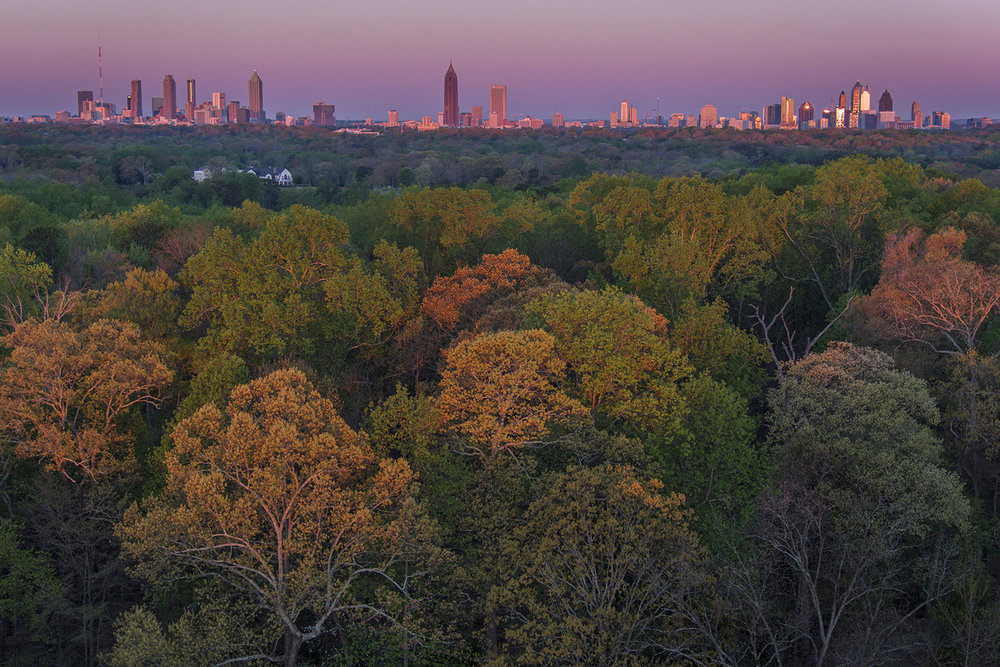 001_Forest and downtown.jpg