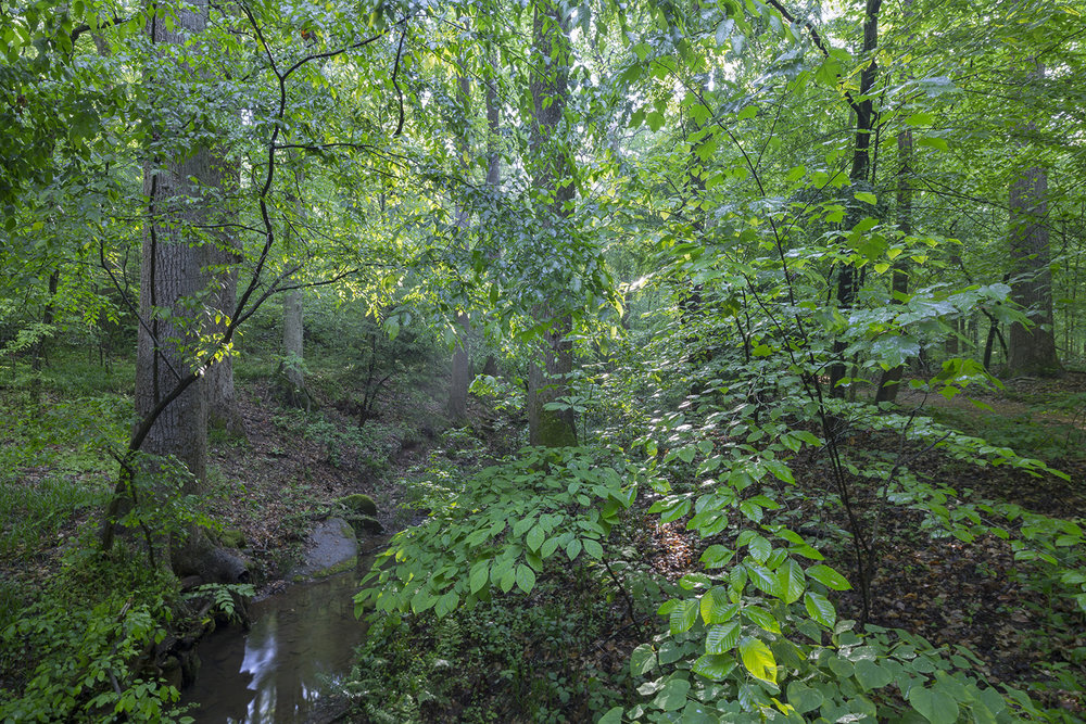 007_Forest stream-4:23:16.jpg