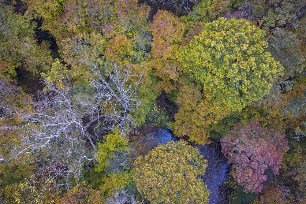 008_Fall Colors drone-11:22:16.jpg