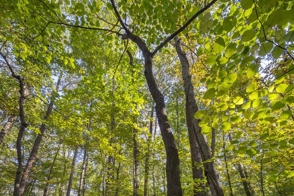 016_Green forest sunrise.jpg