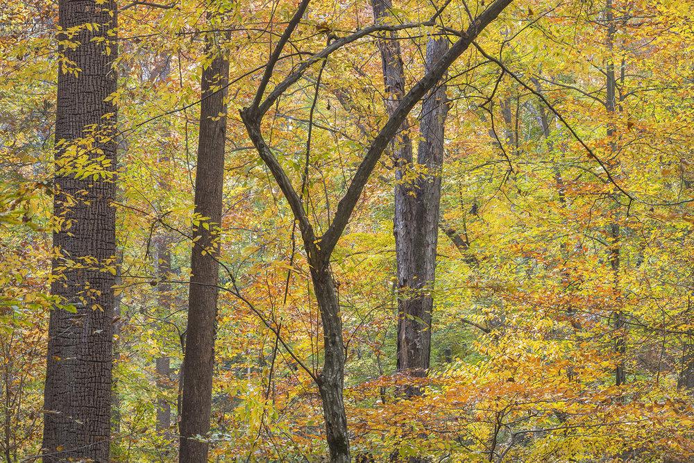 019_Fall Colors 2-11-23-16.jpg