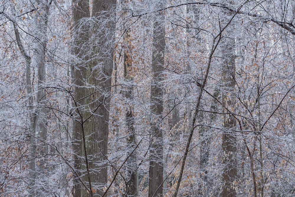 025_Ice storm.jpg