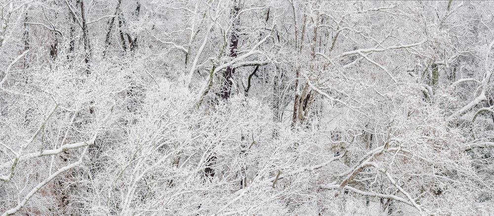 026_Fernbank Snow_0154 Panorama-12-9-17.jpg