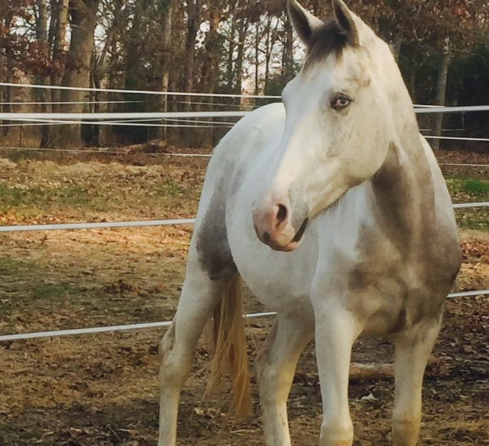 Chyann - Refused due to an eye injury.