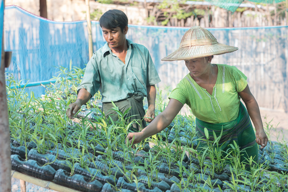 Terre Des Hommes Italia - Myanmar, Livelihood