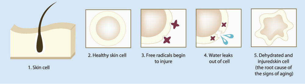 Acupuncture and facial rejuvenation acupuncture helps to restore the integrity of your cells