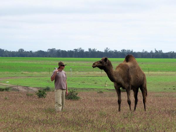 Paul and camel_2.jpg