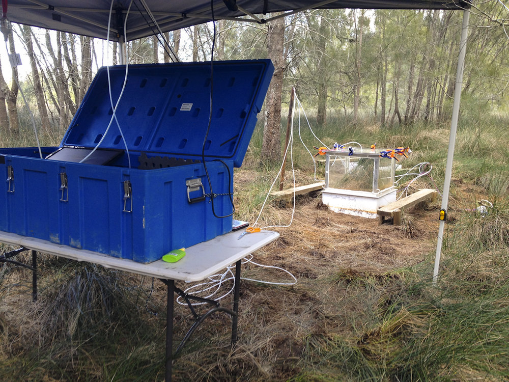Picarro set up at site A amongst the casuarina forest