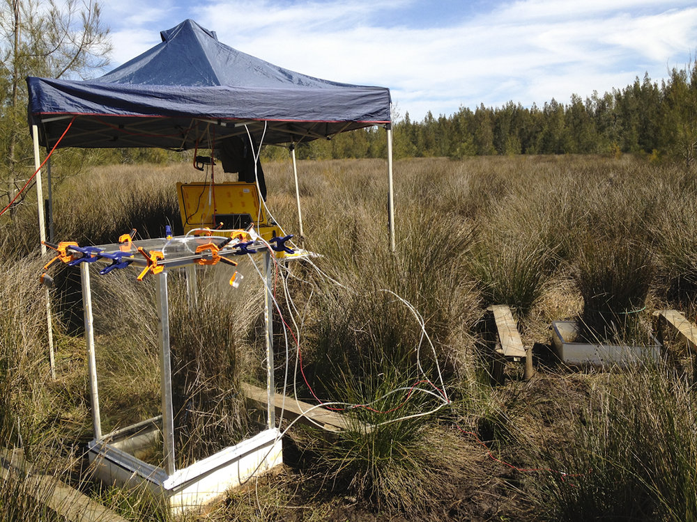 Juncus vegetation flux chamber and picarro timeseries station
