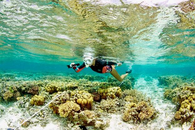 Seachanger in search of bright spots in Great Barrier Reef  SCU  June 7th, 2018    https://www.scu.edu.au/engage/news/latest-news/2018/seachanger-in-search-of-bright-spots-in-great-barrier-reef.php