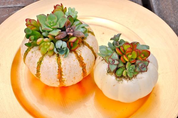 mini-pumpkin-succulent-planters.jpg