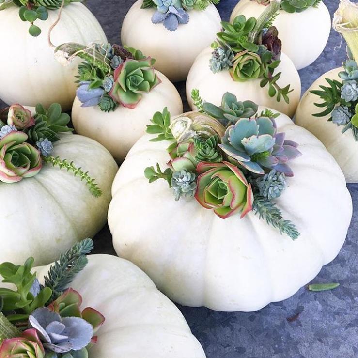 Pumpkin Succulents Mint Studio