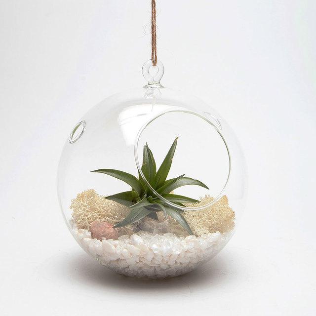full_Hanging-Globe-Terrarium.jpg