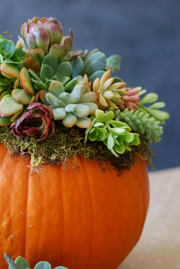 Pumpkin-Succulent-Arrangement-simplyhappenstance.com-136.jpg