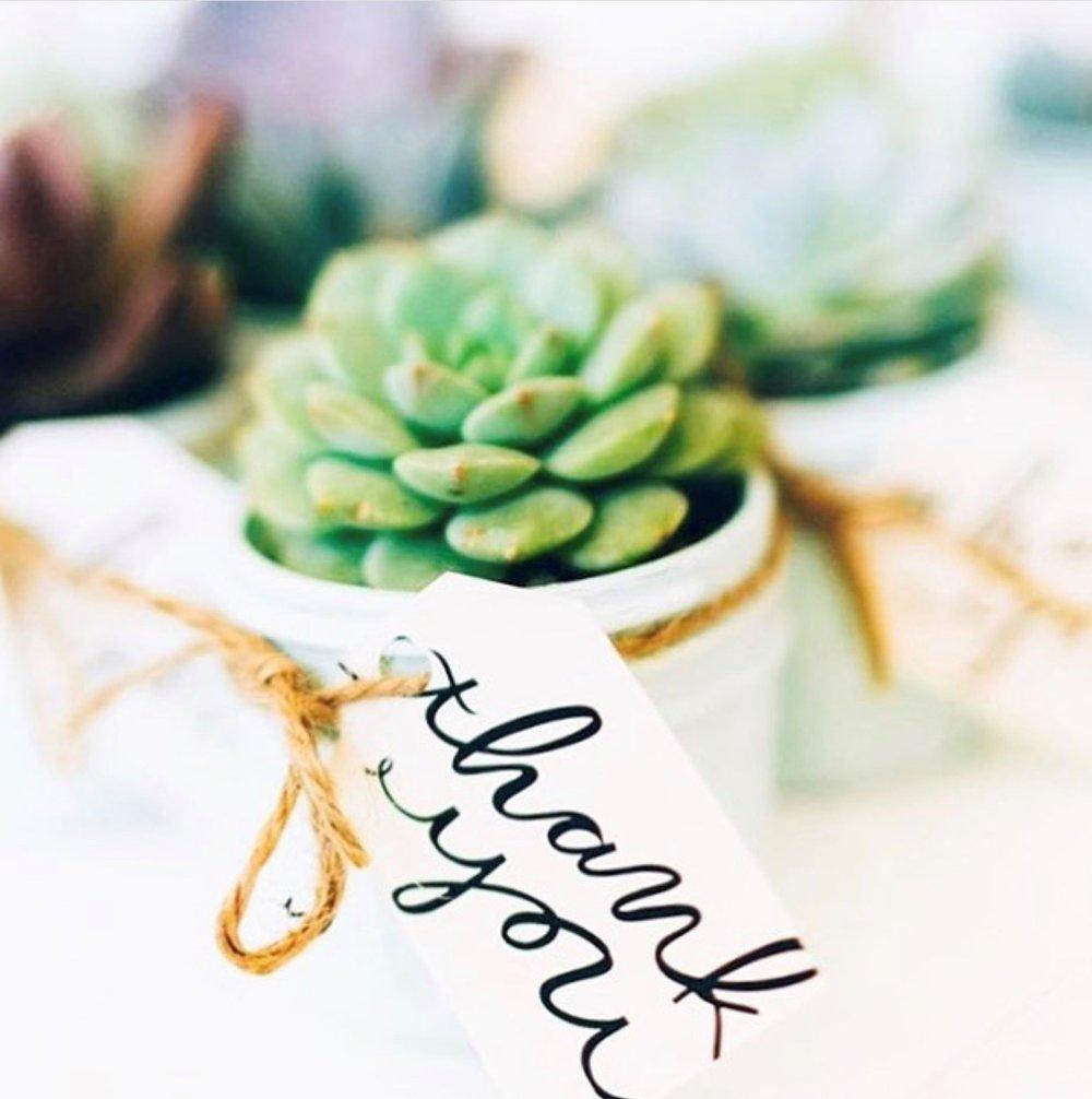 Mint Studio Succulent.jpg