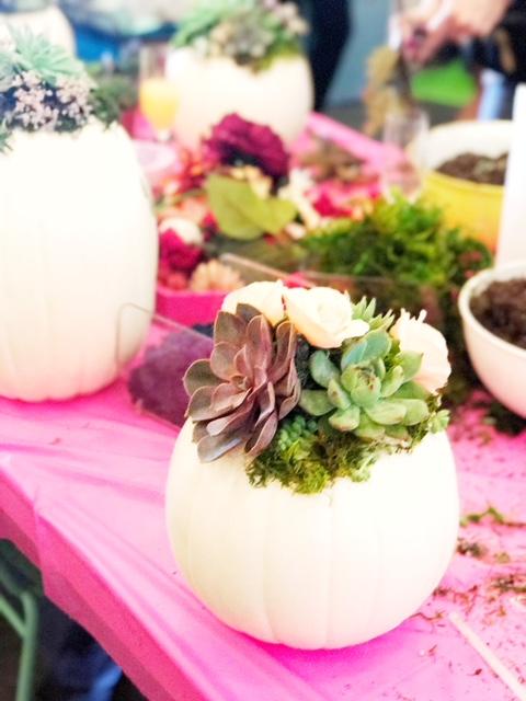 Mint Studio Pumpkin Succulents....JPG