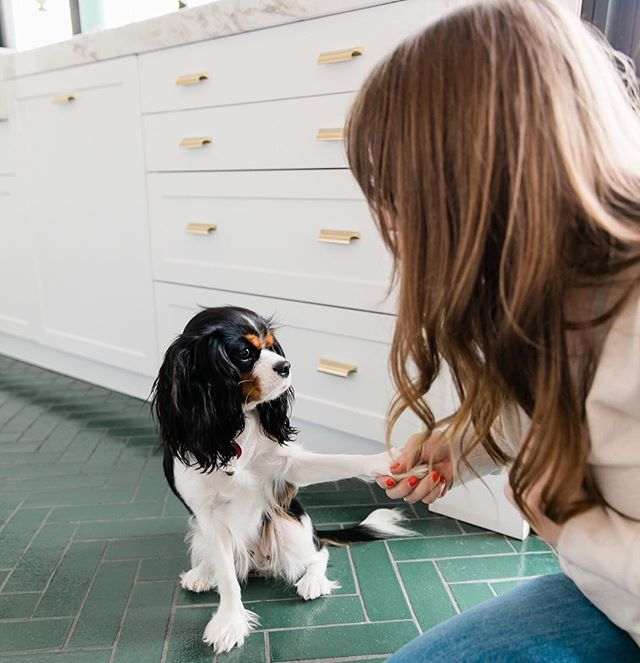 """J: """"Do you promise to be the cutest, sweetest, cuddliest creature?"""" B: """"Promise, no bones about it."""" J: """"K, let's shake on it."""" Photo by @tslrlifestyle (and I'm well aware that I'm a complete dog-dork✔️). #alittlebirdiejune"""