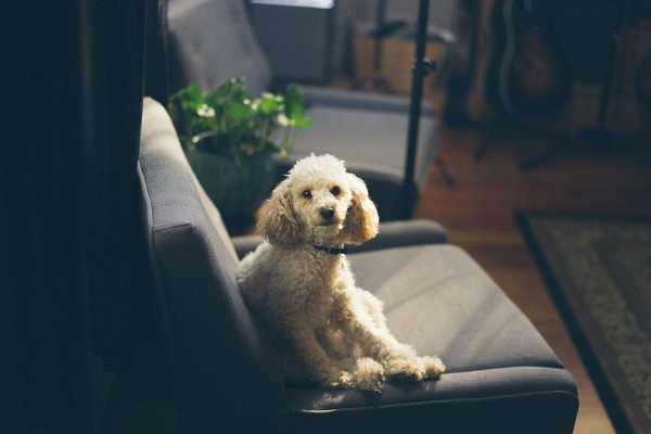 dog-on-the-chair.jpg