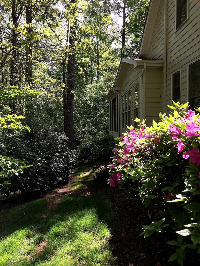 azaleas, rhododendron, flower power
