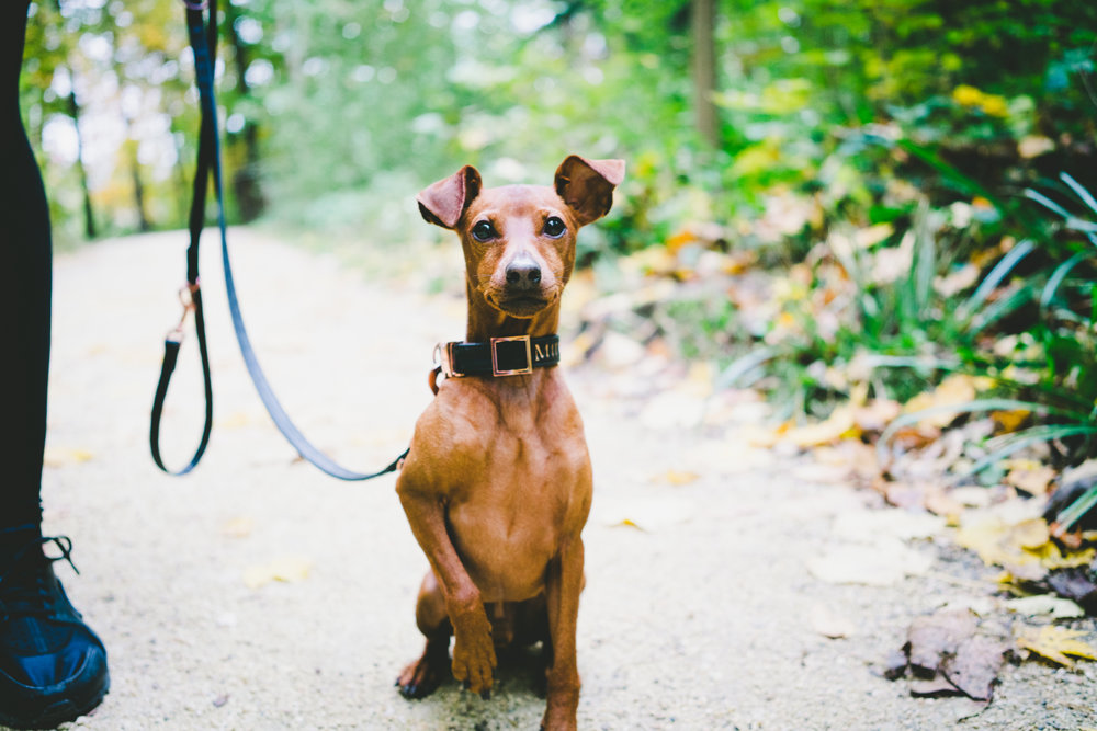 dog_walking_home