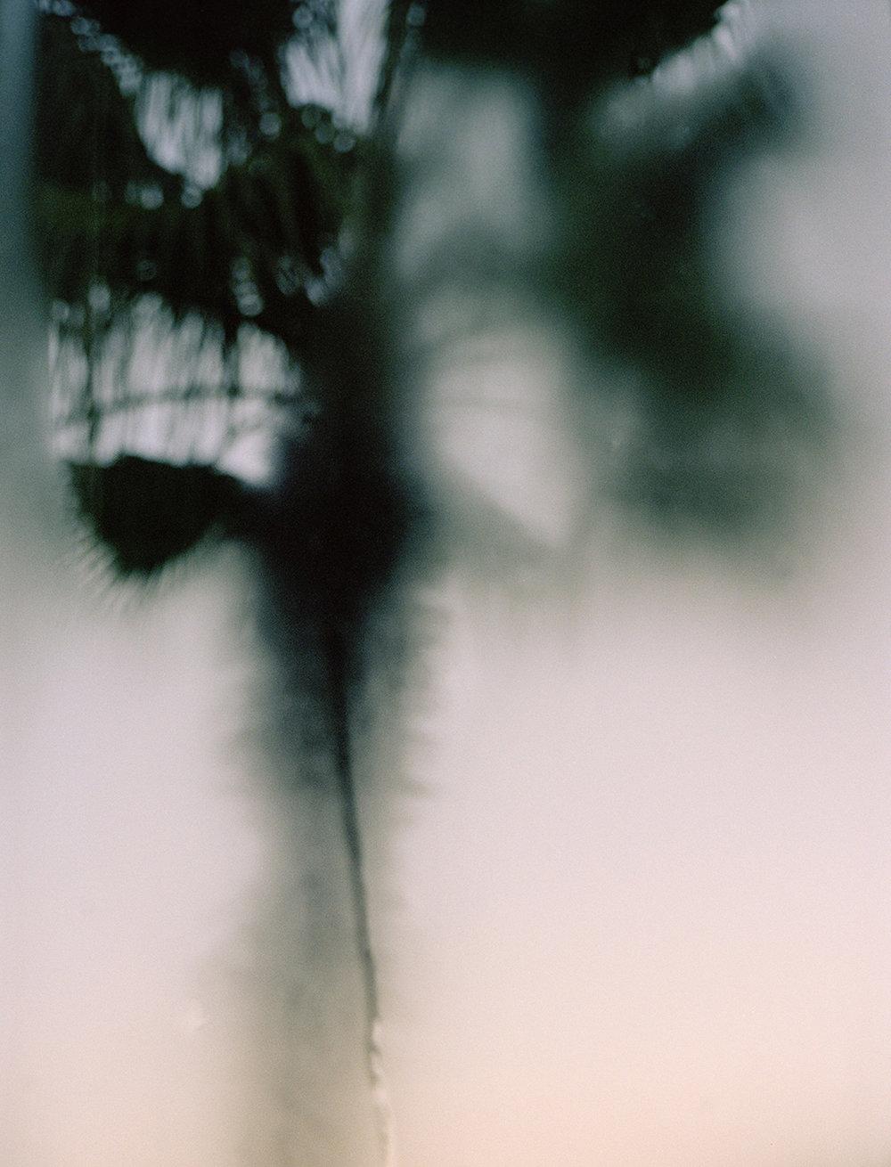 001_crop.jpg