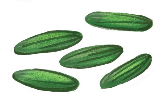 the-vurger-co-vegetable-garden-cucumbers.jpg