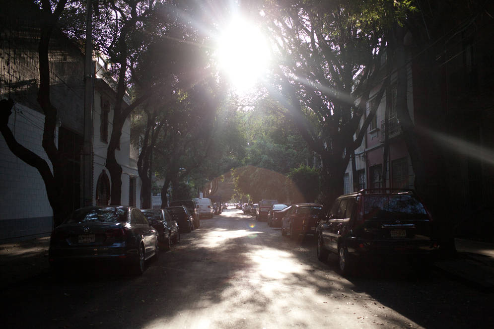 The tree-lined streets of Roma Norte (image via Airbnb)