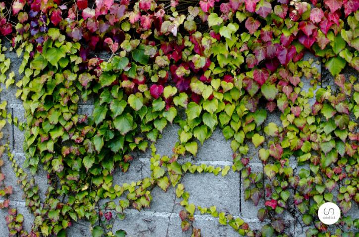 Living walls include shrubs, vines, and even perennials