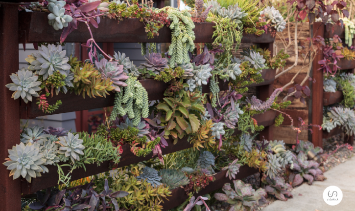 Succulents are low maintenance plants for living walls