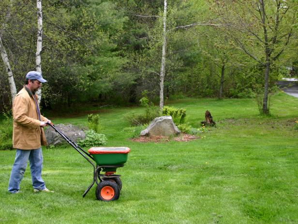 overseeding the lawn in autumn