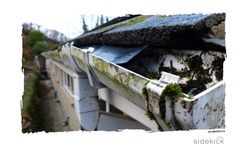 Gutter in need of cleaning and repair