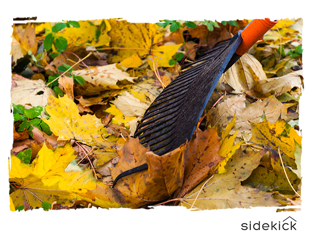 Winterizing Through Removing Dead Leaves