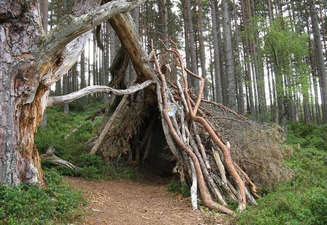 survival-shelter..2.jpg