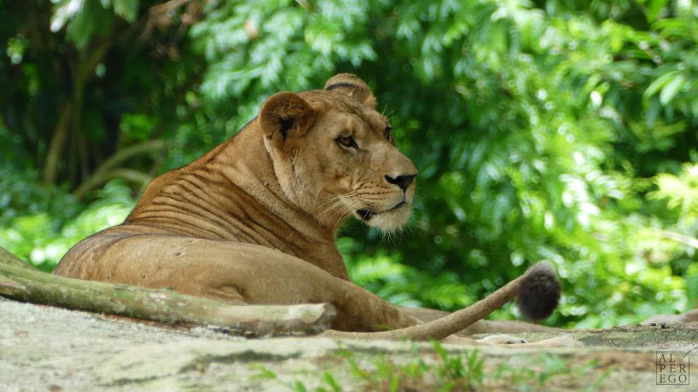 singapore-zoo-07.jpg