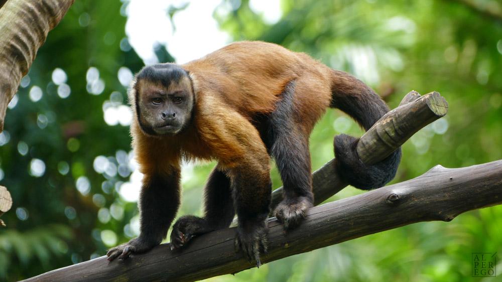 singapore-zoo-17.jpg