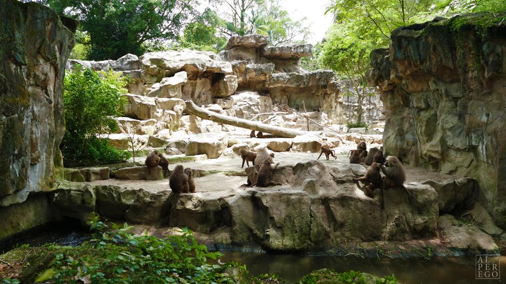singapore-zoo-25.jpg