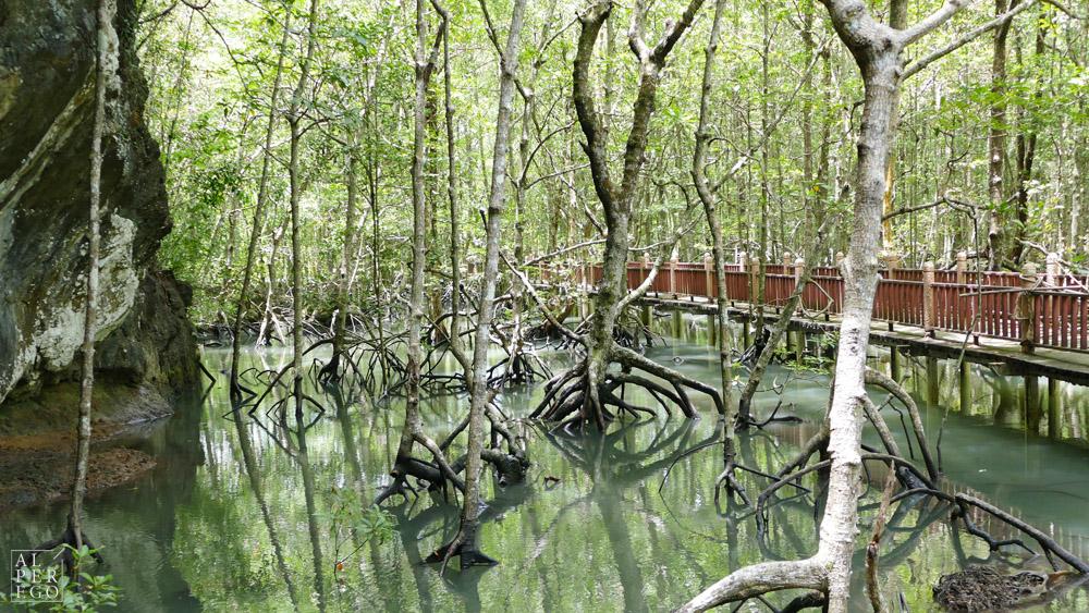 kilim-geoforest-park-langkawi-04.jpg