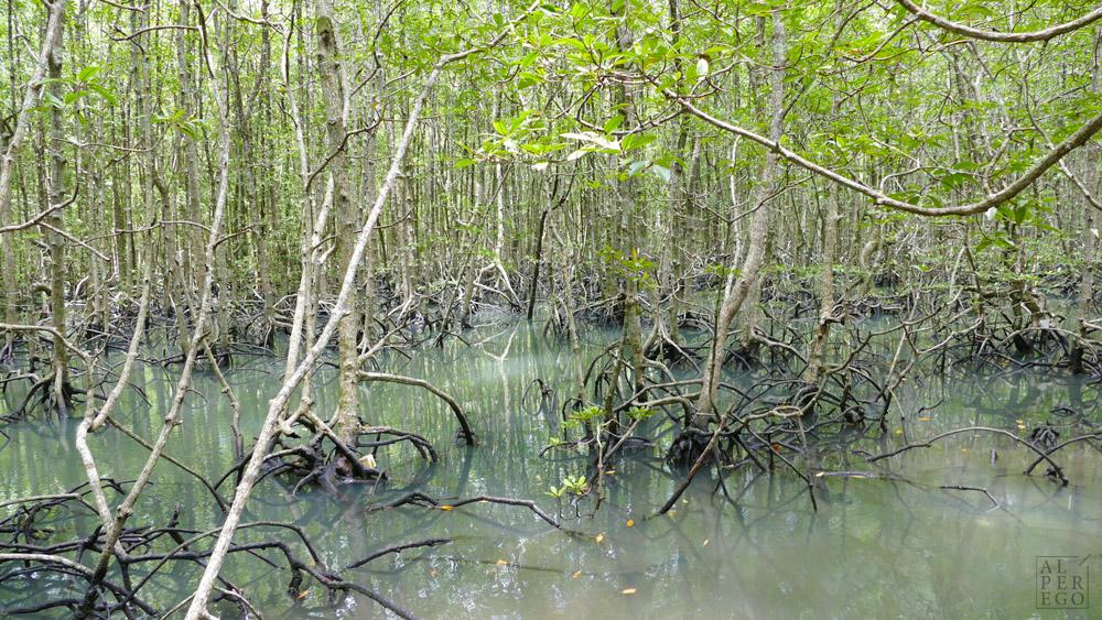 kilim-geoforest-park-langkawi-07.jpg