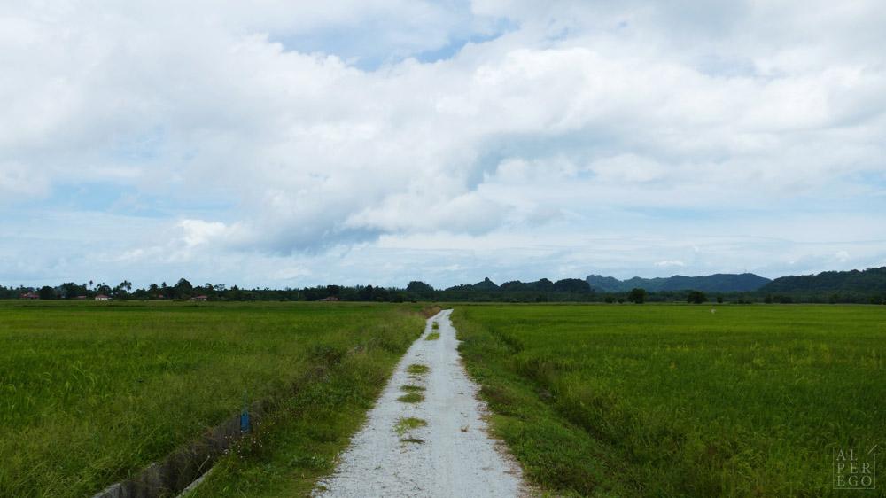 langkawi-rice-farm-01.jpg